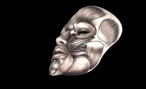 Rukout Cg Tutorial 3d Facial Modeling
